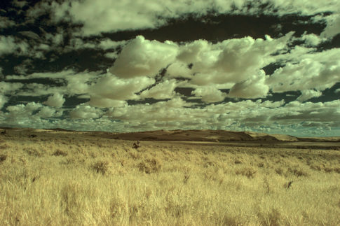 Infrared picture of 'Across The Pasture' by Nadine Levin Photography
