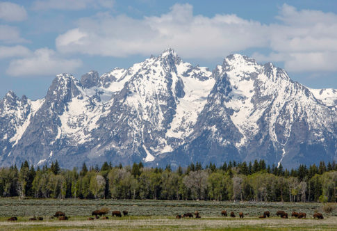 Western picture of 'Bison In The Park' by Nadine Levin Photography