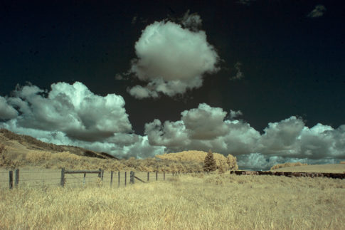 Infrared picture of 'Fenceline and Cattle' by Nadine Levin Photography