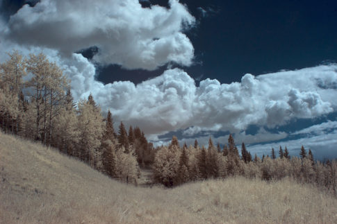 Infrared picture of 'Lookin For The Cattle' by Nadine Levin Photography