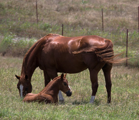 Western picture of horses 'Safe By Mom' by Nadine Levin Photography